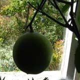 лимон 7кб